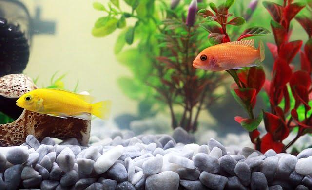 plantas para acuario